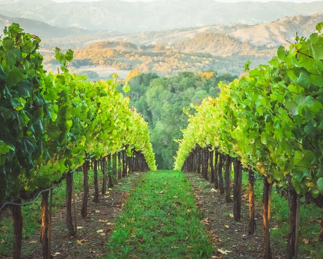 Sparkling Wine vs Champagne - What's the Difference? CRU